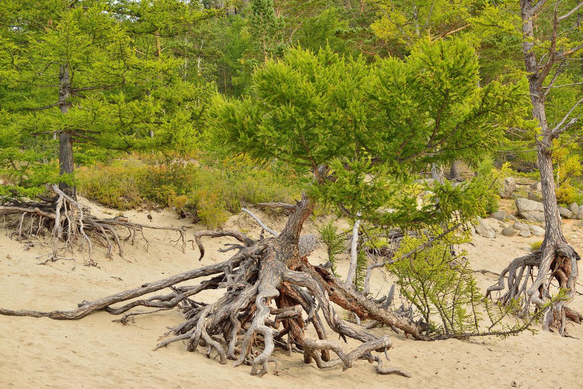 котики дерево на байкале картинки выдастся еще какой-то