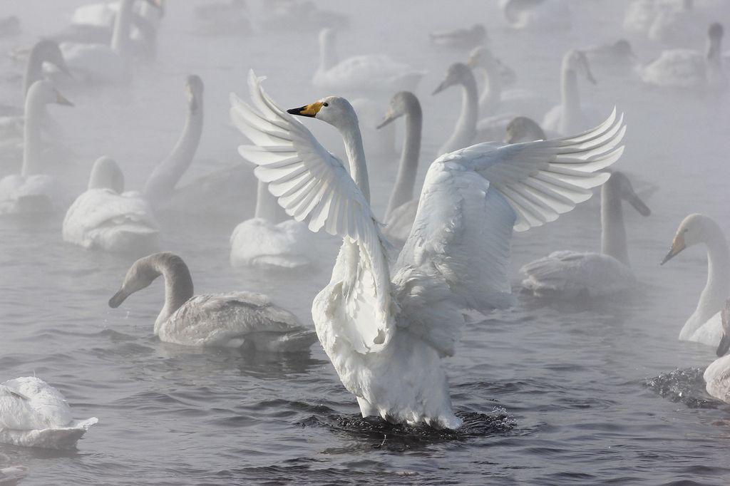 Называется, алтайский край картинки с района советского на озере где лебеди